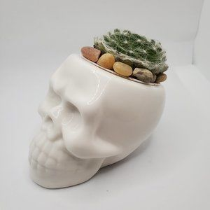 Other - Cobweb Succulent in Ceramic Skull Planter Pot